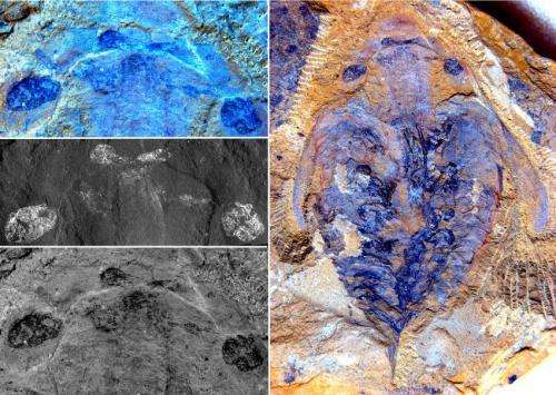Brain of world's first known predators discovered