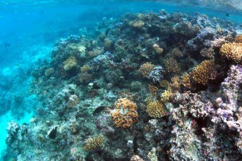 Coral reef winners and losers