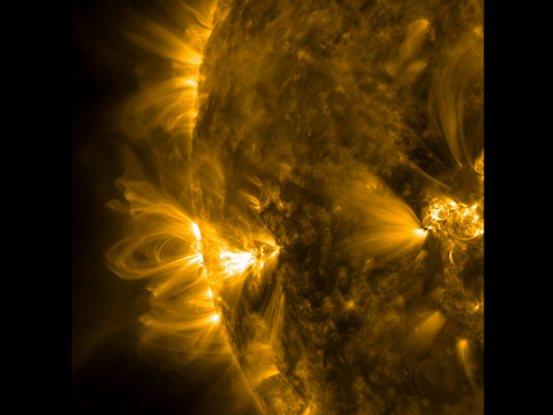 Coronal loops in an active region of the sun