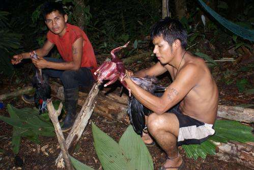Cost sensitive bushmeat hunters help out conservering hunted wildlife species