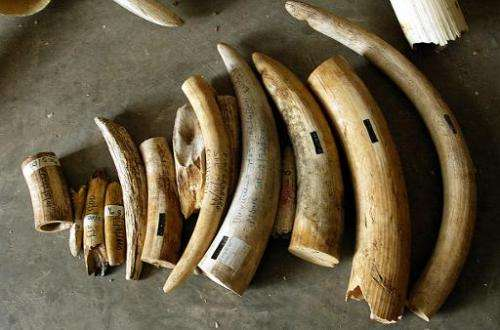 Customs agents at King Khaled International Airport in Riyadh seized half a tonne of ivory being smuggled from Africa to east As