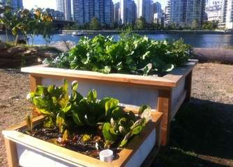 Developing a sustainable living may require urban agriculture