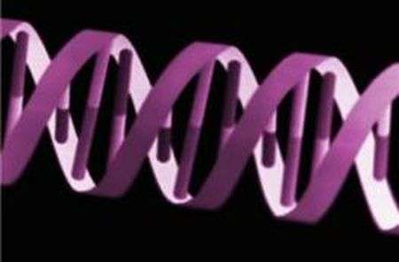 Researchers find genome sequencing can be used to identify severe intellectual disability