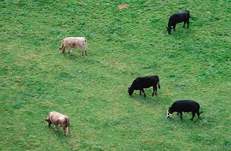 Domesticated animals provide vital link to emergence of new diseases