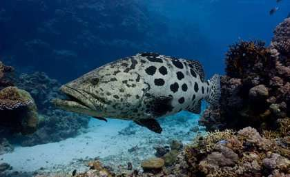 Ecosystems can have their fish, and we can eat them too