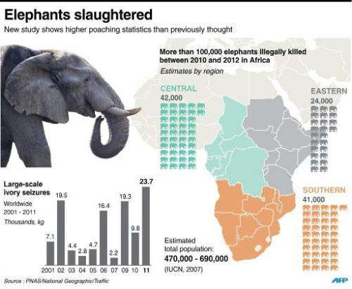 Elephants slaughtered
