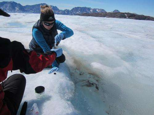 The 'microbial garden' taking the shine off glaciers