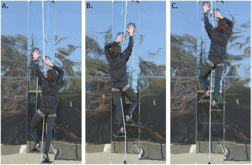 Gecko inspired pads allow researchers to climb glass wall