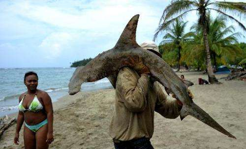 Experts are trying to find ways of keeping sharks away from humans without harming the sea creatures
