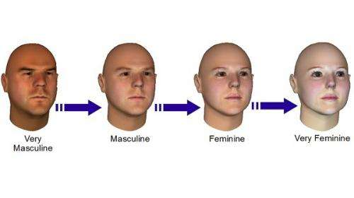 Face 'model' accurately weighs gender points