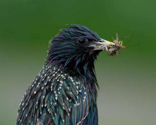 'Bee-harming' pesticides also hit bird populations, study reports