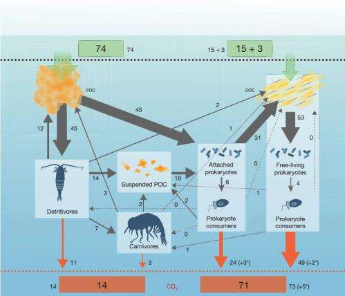 Researchers measure carbon movement in ocean's 'twilight zone'