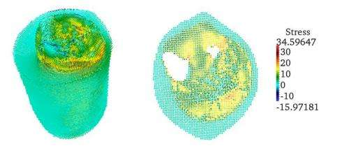 First comprehensive meshfree numerical simulation of skeletal muscle tissue achieved