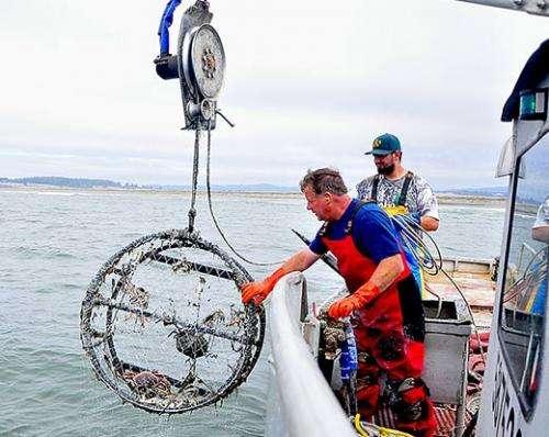 Fishermen clean ocean of lost crabbing gear