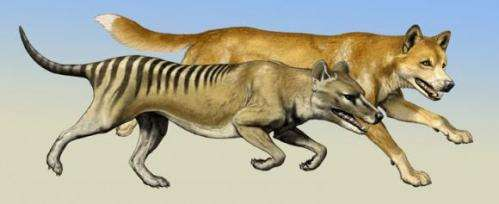 Forelimb bone data predicts predator style
