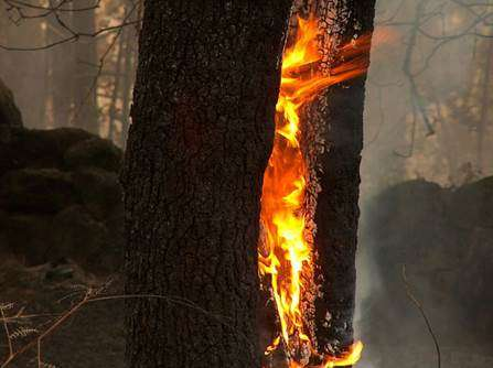 Forest fires in Spain have evolved with the climate since 1968