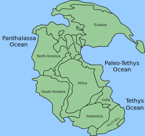 Fossilized marine plankton tell the tale of the end Permian mass extinction