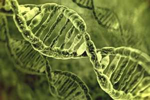 Genomics: The significance of silence