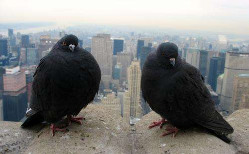 Global survey of urban birds and plants find more diversity than expected