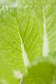 Green vegetables could improve heart's efficiency, blood supply to organs and reduce risk of diabetes and obesity