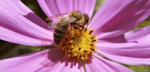 Honeybees play a vital role in the agricultural industry