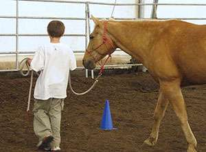'Horsing around' reduces stress hormones in youth
