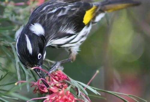 How birds' visual perception influences flower evolution