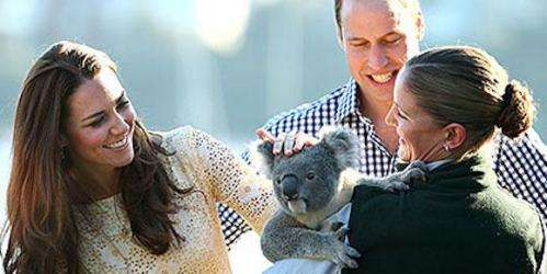 How many visitors can a Koala bear?