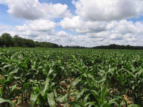 ¿Cuánto fertilizante es demasiado para el clima?