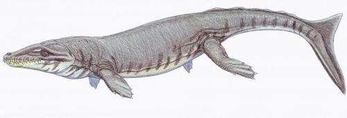 Huge tooth fossil shows marine predator had plenty to chew on