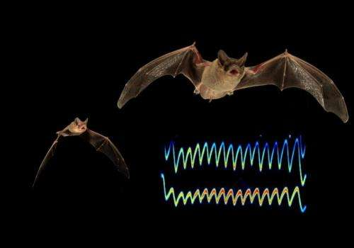 Hungry bats compete for prey by jamming sonar
