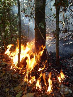 Fire and drought may push Amazonian forests beyond tipping point