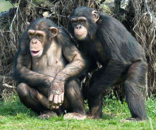 Identification of gene that influences joint attention in chimpanzees provides insight into autism spectrum disorders