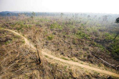 Imazon's Deforestation Alert System found that clearcutting in Brazil's nine Amazon basin states hit 244 square kilometers for O