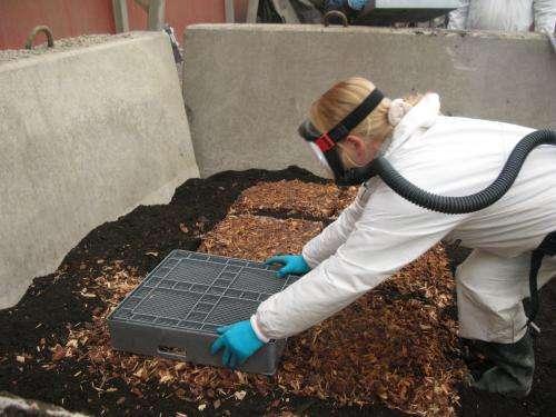 Fungi clean oil-polluted soil