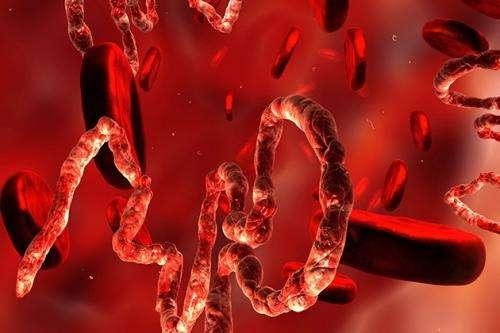 Immune response key to beating Ebola