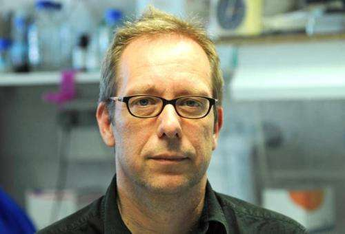 Immunologists discover immune system precursor cells that fight infection
