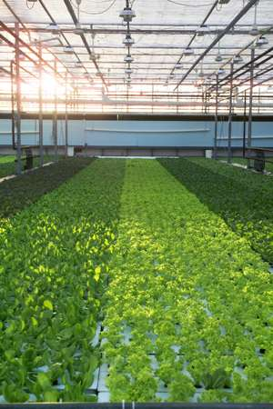 Indoor urban farms called wasteful, 'pie in the sky'