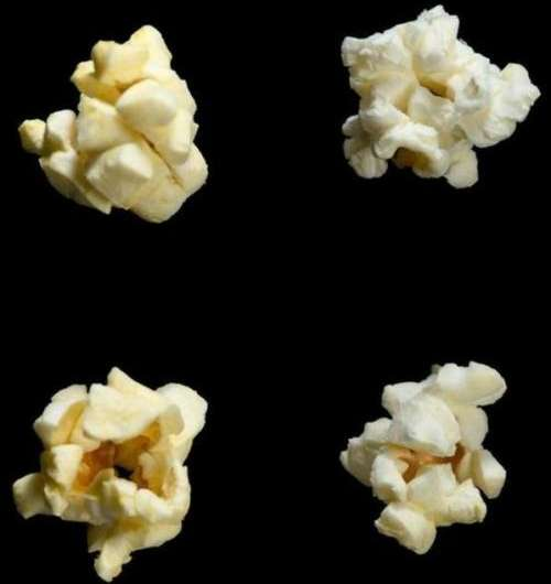 Is a 'buttery' molecule behind cystic fibrosis flare-ups?