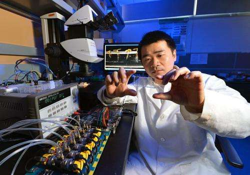 ISU engineer builds instrument to study effects of genes, environment on plant traits