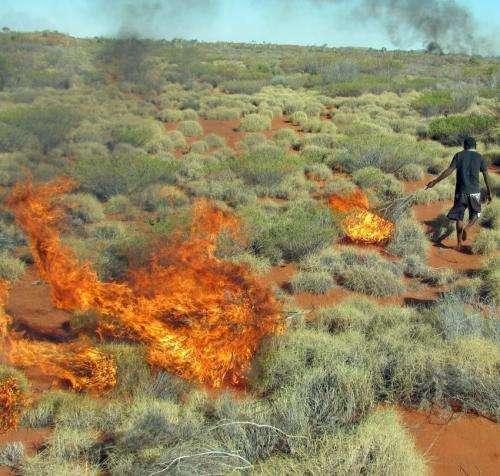Kangaroos win when Aborigines hunt with fire