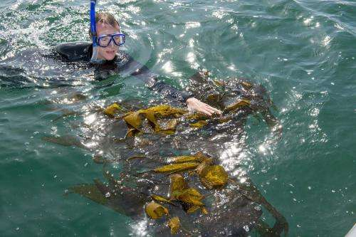 Kelp study finds no ocean-borne Fukushima radiation