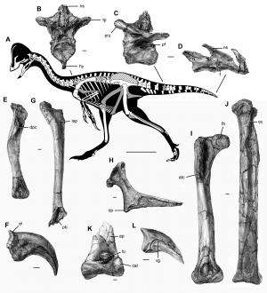 Large feathered dinosaur species discovered in North America