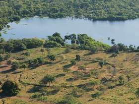 Large parts of the Amazon basin may have once looked more like open savannah