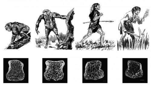 Lightweight skeletons of modern humans have recent origin