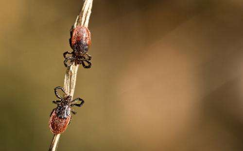 Lyme disease identified in Bay Area ticks, and it isn't alone