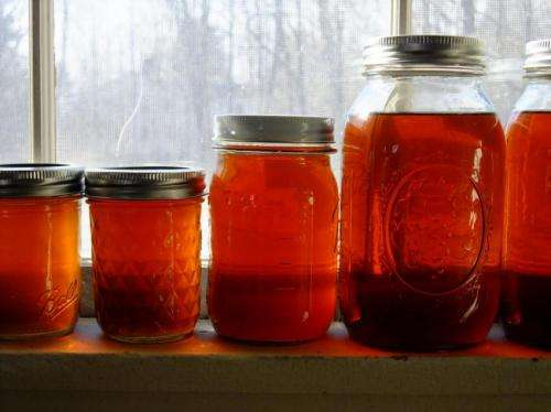 Maple syrup production declines after big seed year