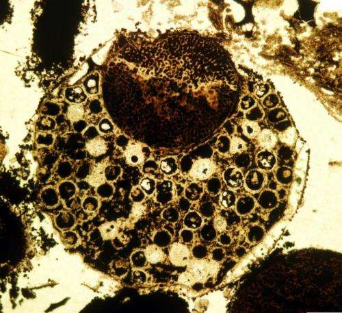 New evidence of ancient multicellular life sets evolutionary timeline back 60 million years