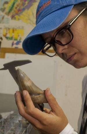 Megalodon shark became extinct 2.6 million years ago