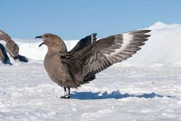 Mercury contamination threatens Antarctic birds